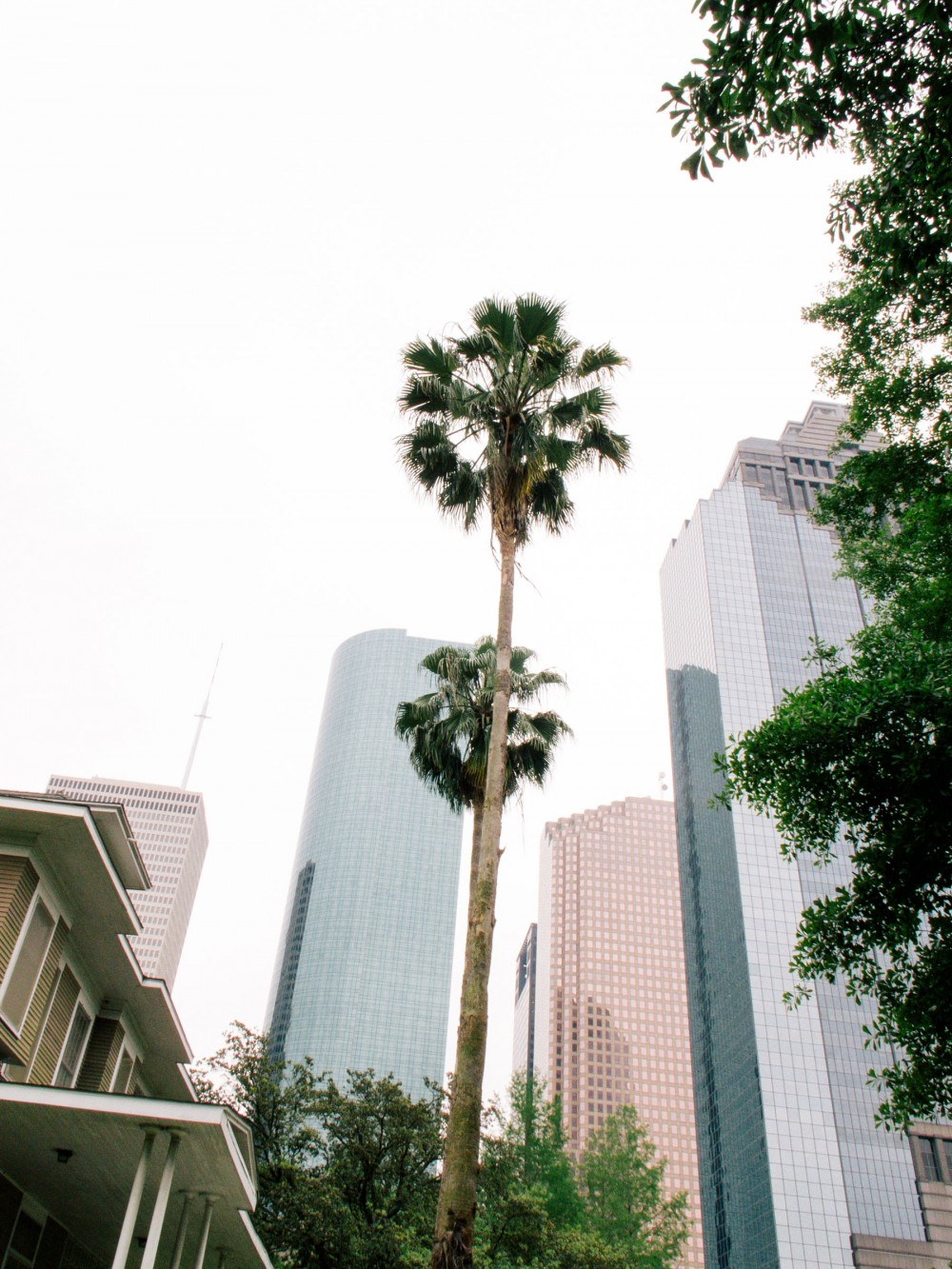 Photograph of two tall palm trees among city skyscrapers. By Brenda Cruz Wolf