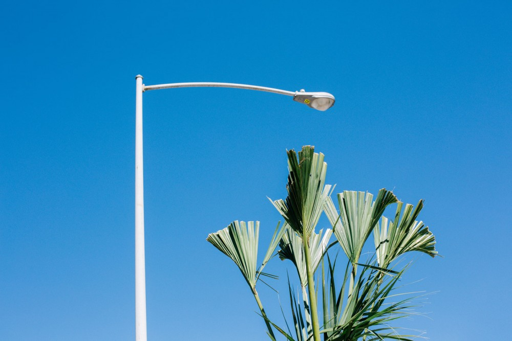 Photograph of a palm tree sitting under a street light By Brenda Cruz Wolfph by Brenda Cruz Wolf