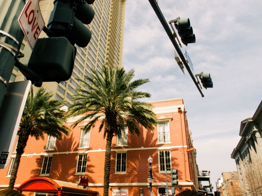Photograph of two palm trees at a city junction. By Brenda Cruz Wolf